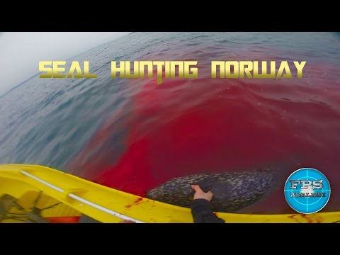 SEAL HUNTING IN NORWAY #Sealhunting Episode 3 FNAR 308W