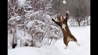 Cats Enjoying Winter and Snow - Funny Animal Videos Compilation 2018 [BEST OF]