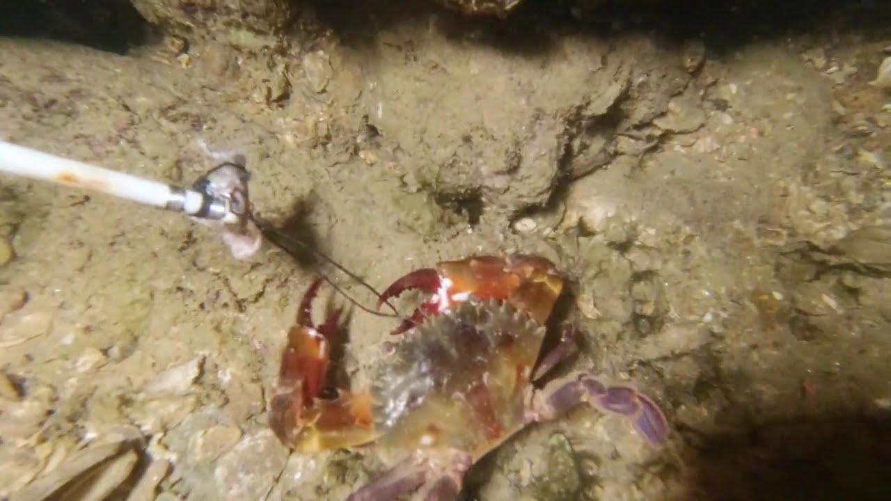 抓螃蟹比吃飯還簡單!老旺輕鬆抓爆桶,海鮮當早餐吃你試過嗎【老旺與海】