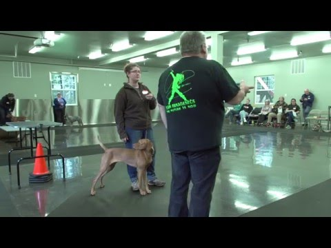 Gaiting your dogs using hand signals