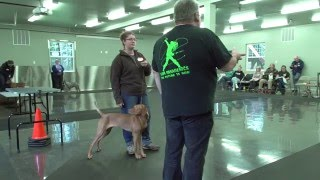 Gaiting your dogs using hand signals with Eric Salas Workshops thumbnail