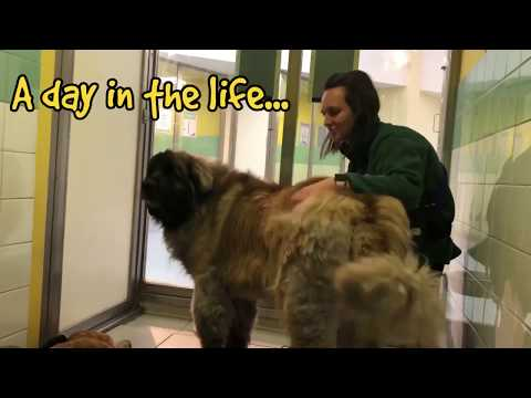#PPLCharity - Dogs Trust Canine Carers - People's Postcode Lottery