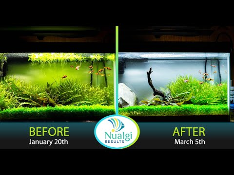 Review of Nualgi after 12 Week Trial in Freshwater Aquarium