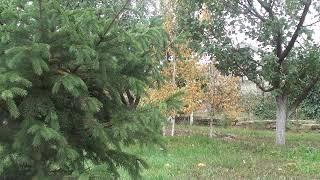 Пение птиц, звуки природы, Звуки Леса, звуки деревьев 2019