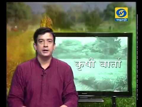 Krishivarta Bajarbhav - 11 May 2018 - कृषीवार्ता बाजारभाव