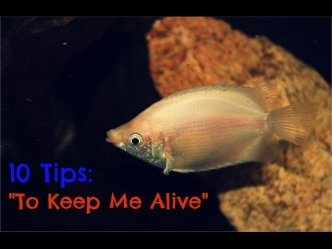 10 Tips To Keep Your Aquarium Fish Alive