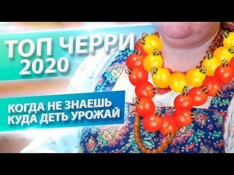 НА ВСЕ ВКУС И ЦВЕТ! ТОП-9 ТОМАТОВ ЧЕРРИ 2020 | сибирские | урожай_2019 | томаты_2019 | мясистые | томат_2019 | томатов | соленья | красные | бийский | томаты