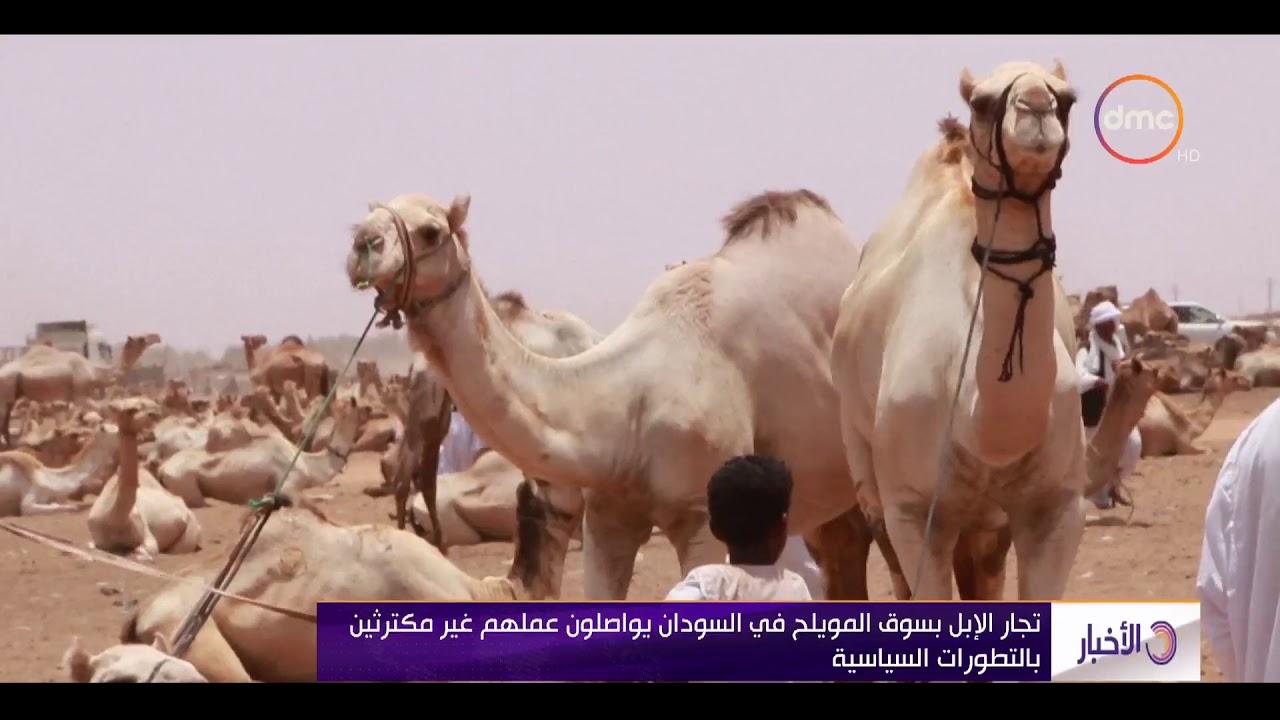 dmc:الأخبار - تجار الإبل بسوق المويلح في السودان يواصلون عملهم غير مكترثين بالتطورات السياسية