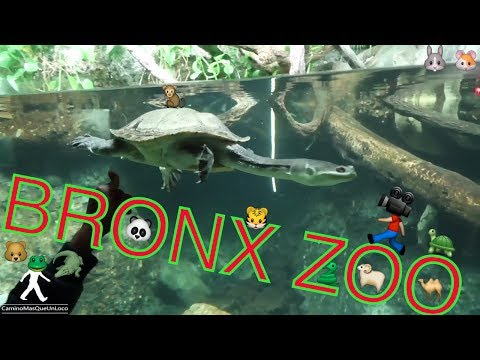 ZOOLOGICO BRONX ZOO NEW YORK