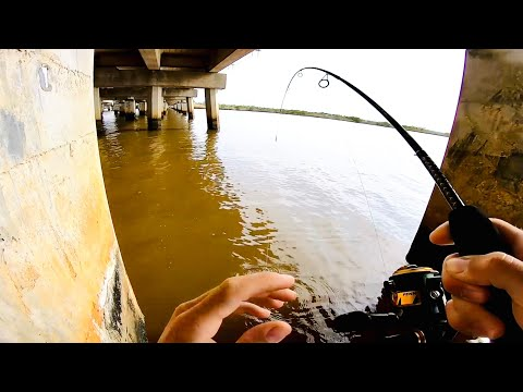 THESE FISH WERE NOT EASY TO CATCH! SALTWATER FISHING WITH LIVE SHRIMP AROUND BRIDGE PILINGS!