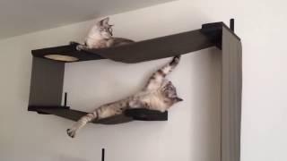 Форт-Кот - настенные домики для кошек