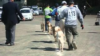 2012・5・20 (社)天然記念物北海道犬保存会 第171回本部展...