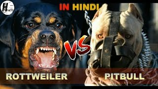 Rottweiler VS Pitbull | Hindi | COMPARISON | DOG VS DOG | HINGLISH FACTS