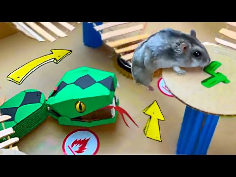 Snake Hamster Maze with Traps [OBSTACLE COURSE] + BONUS