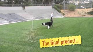 Get Out Puppy Agility: Clicker Training