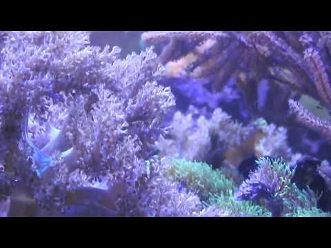 Sea Aquarium - Kragujevac city, Serbia - 21-Oct-2017 in 2:33 PM - By Dragana M. Redzic, Serbia