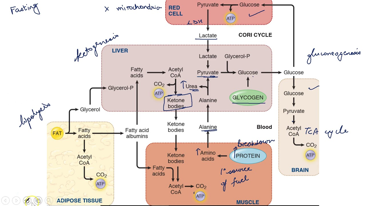 Metabolism And Cold War Architecture
