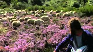 Transhumance des moutons en Cévennes
