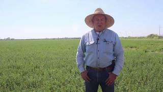 2019 alfalfa harvesting season