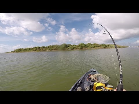 Topwater Speckled Trout In Port O'Connor, Texas