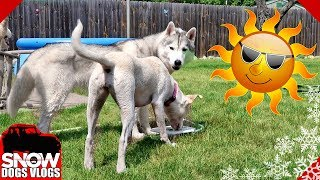 over-100-degrees-dog-pool-party-time