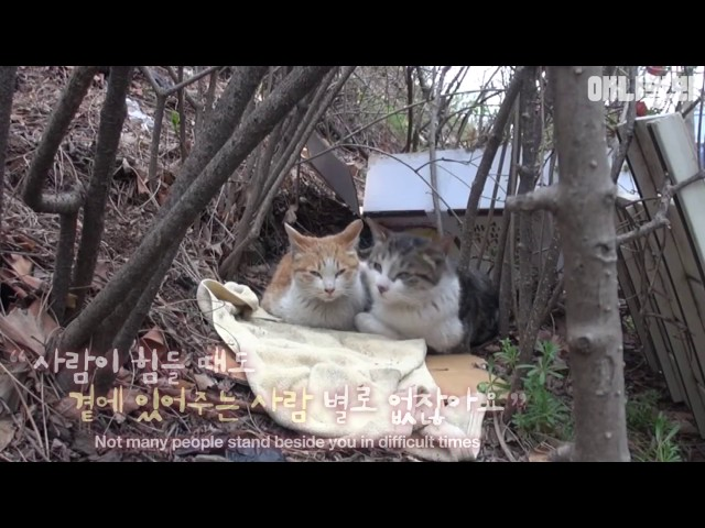 The bodyguard cat protects the injured friend.