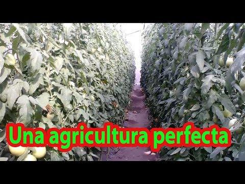La granja orgánica