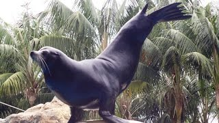 Шоу морских котиков (show of seals) Safari World, Таиланд, Бангкок