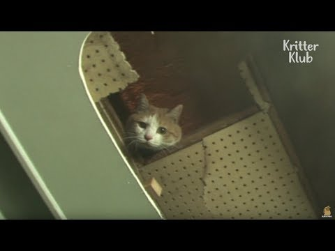 The Cat Living Behind Walls   Animal in Crisis EP6