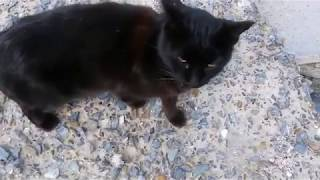 A Cat at the Seaside - Cats World - Cats Film -  Stray Cats