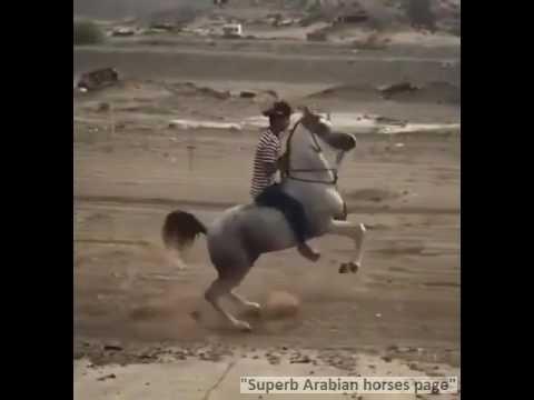 WooooW, Arabian horse extreme riding!!!!!