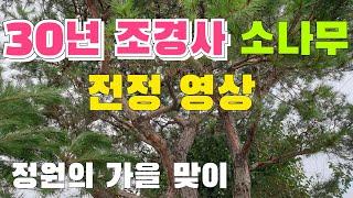 소나무 전정 | 정원, 조경, 30년 경력 조경사 | …