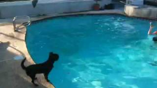 Great Dog Tricks: Toto Look Alike Playing Volleyball