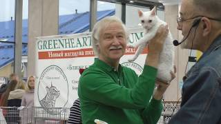Конкурс кошек WCF ринг на выставке кошек в Екатеринбурге - судьи международной категории
