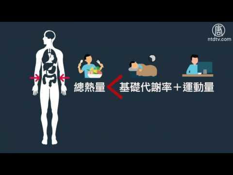 '基礎代謝率'是什麼?│醫學小教室│體重控制│減肥│熱量│健康1+1