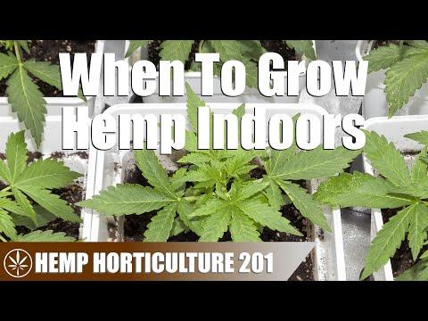 Calculating the Hemp Indoor Grow Season