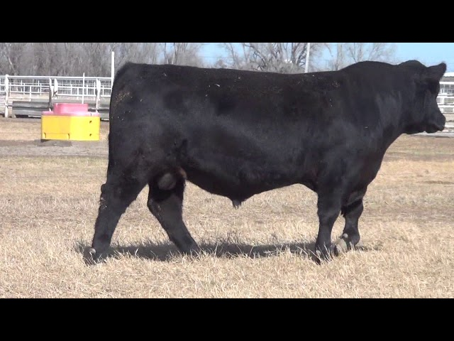 Express Ranches Lot 51