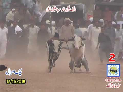 Bul Race In Pakistan Sunny Video Fateh Jang 12 11 2018 NO2
