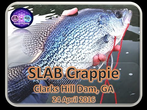 Strom Thurmond Clarks Hill Dam Fishing   Crappie and White Perch   7 May 2016