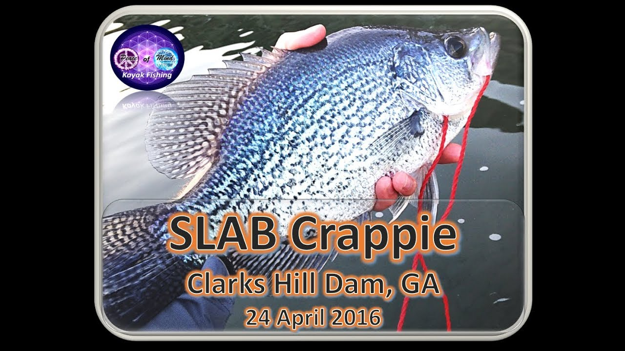 Strom thurmond clarks hill dam fishing crappie and white for Clarks hill fishing report