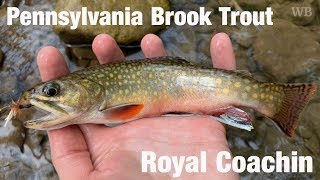 WB - Pennsylvania Brook Trout, Royal Coachin - May '19