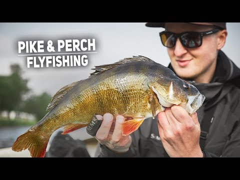 Flyfishing For Big Pike & Perch - Tips And Tricks