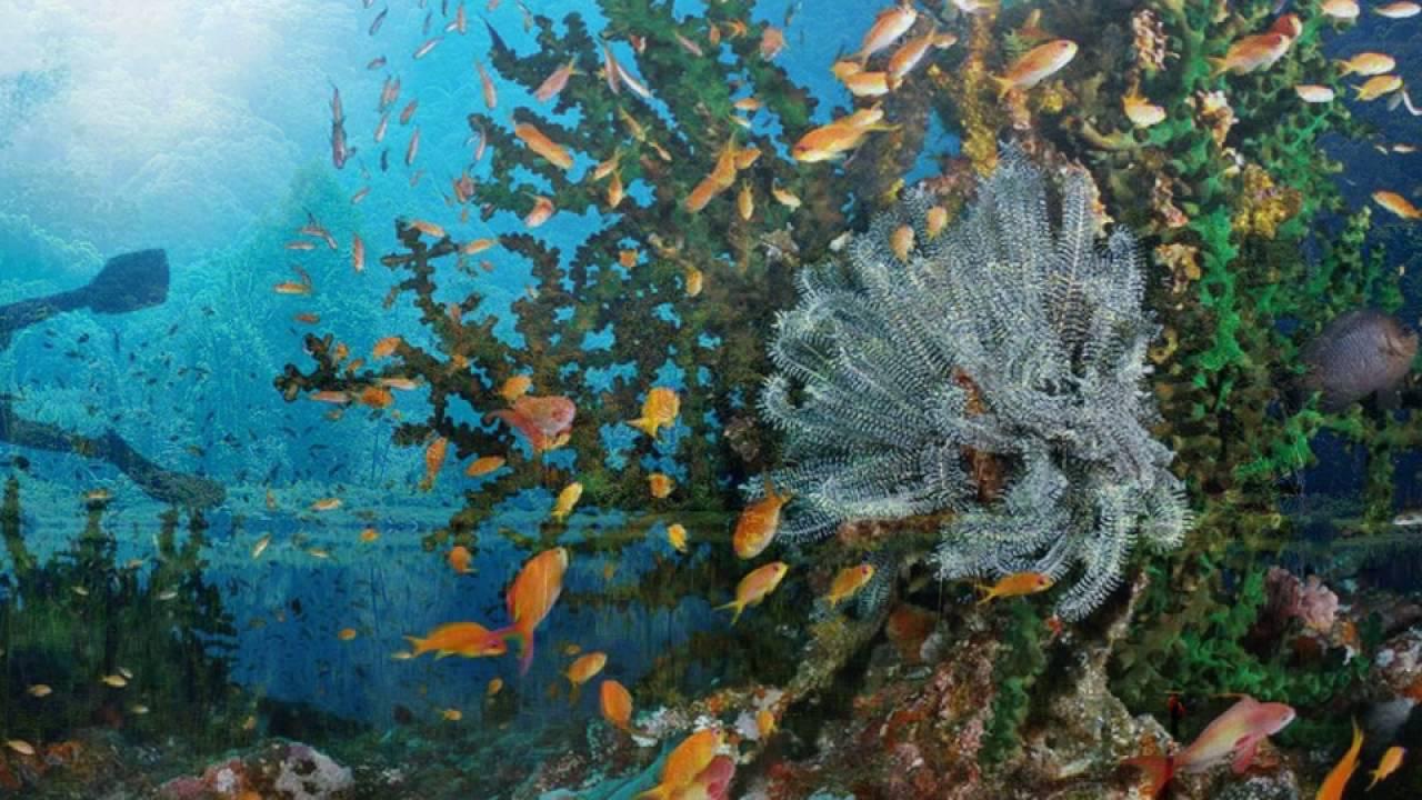 Daaz Potensi Sumber Daya Alam Di Indonesia Dan Pemanfaatannya 16 17