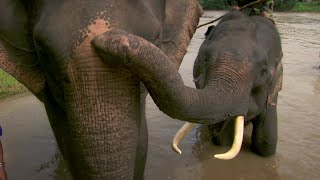 Coffee Farms Threaten Vietnamese Elephants - This World: The Coffee Trail With Simon Reeve - BBC