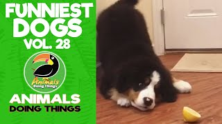 🐶 Try Not To Laugh Funniest Dogs Vol. 28 | Animals Doing Things