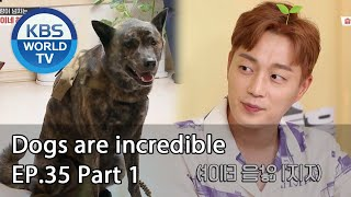 Dogs are incredible | 개는 훌륭하다 EP.35 Part 1 [SUB : ENG,CHN/2020.07.22]