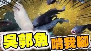 英雄神秘客EP15 - 這溫泉魚會不會太大隻?