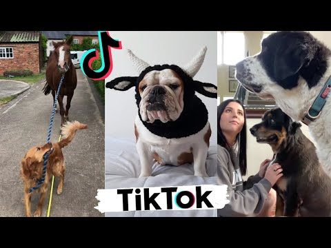 Funny Dogs of TikTok ~ Try Not To Laugh ~ Cute Puppies