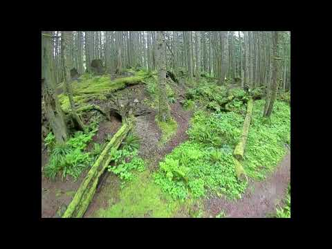Фото FPV Forest Fly