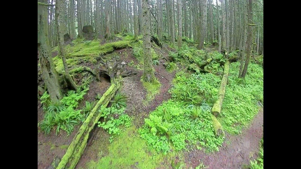 FPV Forest Fly фото